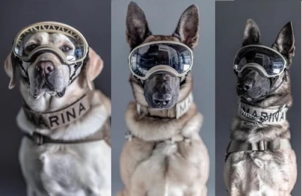 Las imágenes de los perros héroes del terremoto en México que conmovieron las redes