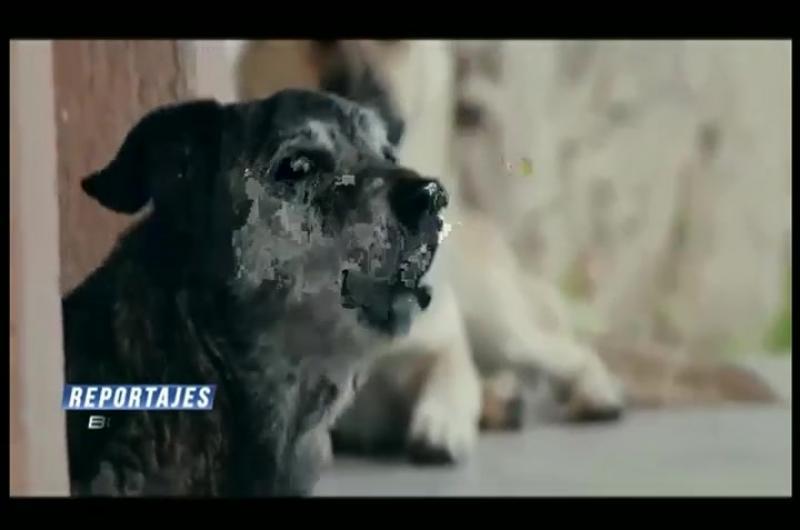 Perritos comunitarios en Bolivia