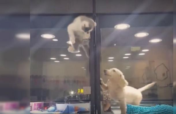 El épico escape de un gatito para jugar con su pequeño y tierno amigo perro
