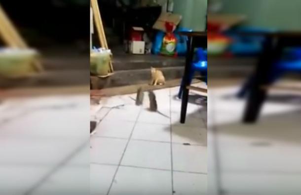 Gato contempla feroz pelea de dos ratones