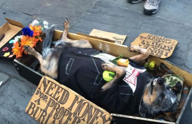 El perro que finge estar muerto para pedir limosna y que es furor en la web