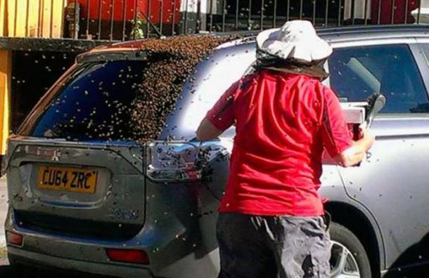 Su carro fue perseguido durante dos días por 20 mil abejas: la razón es muy simple