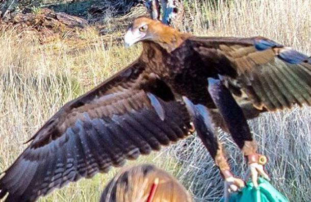 La foto que muestra el momento exacto en que un águila intenta llevarse a un niño