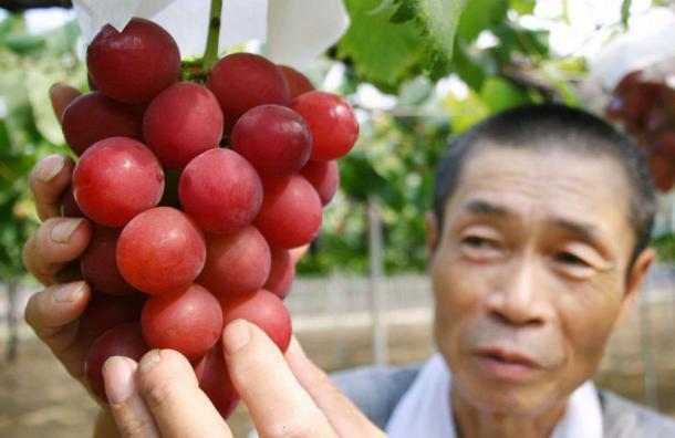 ¿Qué tienen de especial? El racimo de uvas que cuesta más de 10 mil dólares